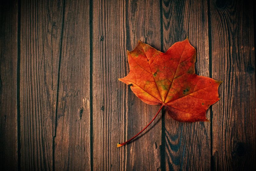 Five Healthy Autumn Activities